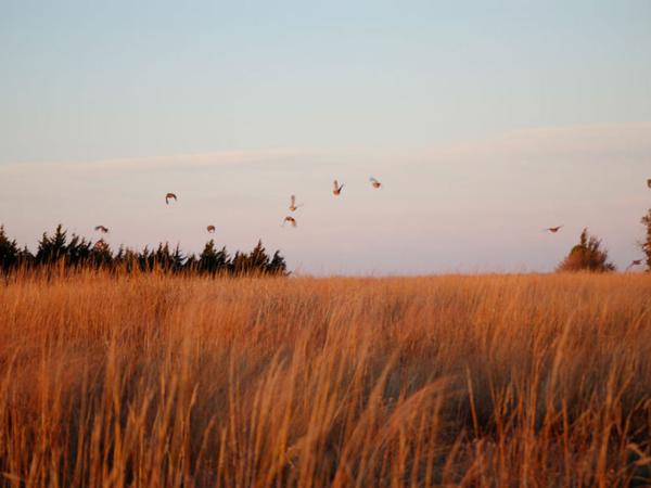 Dove Hunting Rates & Dates