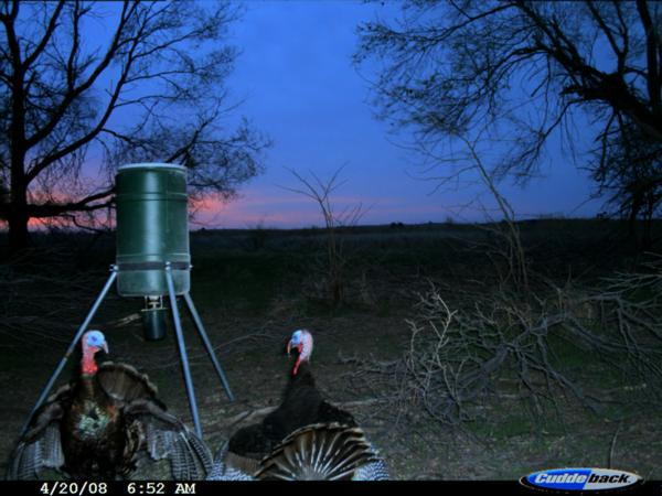 Rio Grande Turkey Hunting Rates & Dates